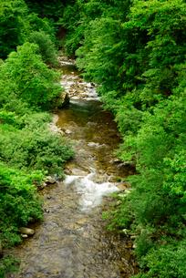 青屋川・飛騨川の支流 乗鞍橋より上流を望むの写真素材 [FYI04068640]