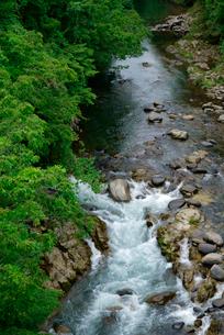 新緑の吉田川・上流を望む の写真素材 [FYI04068646]