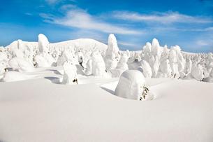 蔵王の樹氷の写真素材 [FYI04069008]