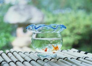 金魚と金魚鉢の写真素材 [FYI04069054]