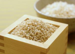 発芽玄米の写真素材 [FYI04069164]