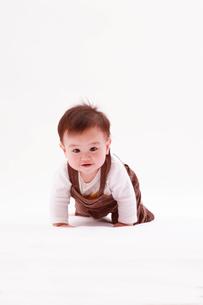 ハイハイする赤ちゃんの写真素材 [FYI04069588]