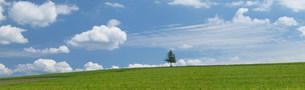 草原の木の写真素材 [FYI04069964]