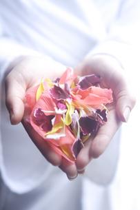両手いっぱいに持った花びらの写真素材 [FYI04070393]