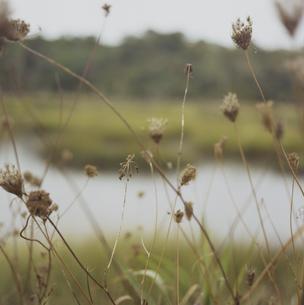 ケープコッドの海岸沿いの草花の写真素材 [FYI04070488]
