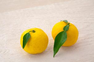 柚子の写真素材 [FYI04071458]