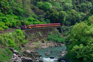 新緑のトロッコ列車の写真素材 [FYI04071498]