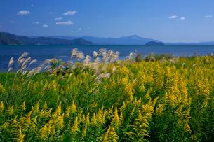 琵琶湖 竹生島の写真素材 [FYI04071536]