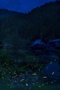 蛍,大原の写真素材 [FYI04071768]