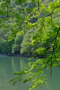 嵐山 新緑の写真素材 [FYI04071878]
