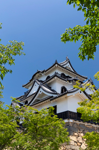 彦根城 新緑の写真素材 [FYI04071900]