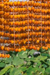 串柿の写真素材 [FYI04071966]