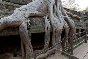 タ・プローム寺院の写真素材 [FYI04072047]