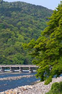 新緑の嵐山渡月橋の写真素材 [FYI04072097]