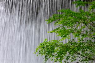 木谷沢渓流 新緑と流れの写真素材 [FYI04072351]