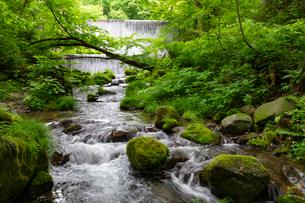 木谷沢渓流 流れの写真素材 [FYI04072353]