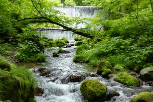 木谷沢渓流 流れの写真素材 [FYI04072354]