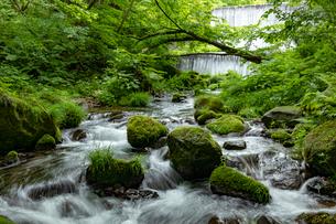 木谷沢渓流 流れの写真素材 [FYI04072355]