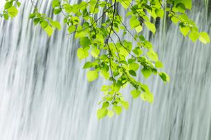 新緑と流れの写真素材 [FYI04072359]