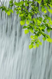 新緑と流れの写真素材 [FYI04072360]