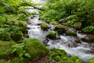 木谷沢渓流の写真素材 [FYI04072363]