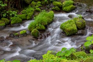 木谷沢渓流の写真素材 [FYI04072367]