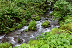 木谷沢渓流の写真素材 [FYI04072368]
