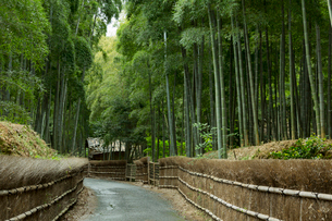竹林の道の写真素材 [FYI04072379]
