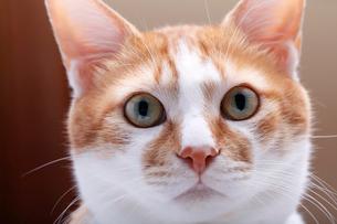 驚いて目を見開く猫の写真素材 [FYI04072479]