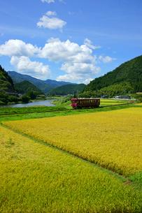 秋の田と長良川鉄道 長良川の写真素材 [FYI04072550]