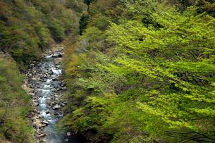 新緑の長良川の写真素材 [FYI04072576]