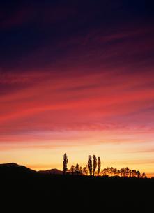 ポプラと夕焼け雲の写真素材 [FYI04072587]