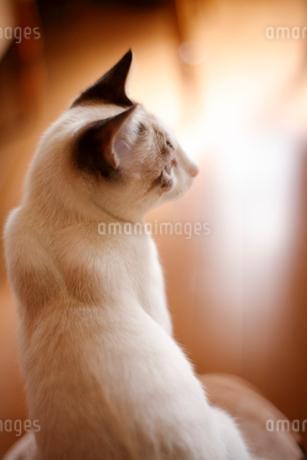 リビングでくつろぐ子猫の写真素材 [FYI04072664]