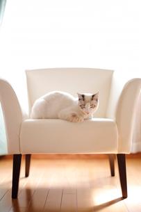 リビングのソファでうたた寝する子猫の写真素材 [FYI04072673]
