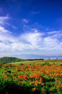 レンゲツツジ咲き誇る霧ヶ峰蛙原と南アルプスの写真素材 [FYI04072933]