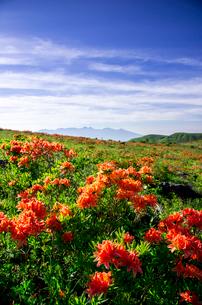 レンゲツツジ咲き誇る霧ヶ峰高原と八ヶ岳連峰の写真素材 [FYI04072936]