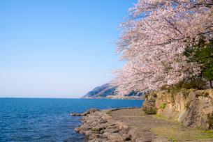 琵琶湖 近江湖の辺の道と桜の写真素材 [FYI04073035]