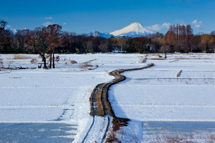 雪化粧の田園の農道と富士山の写真素材 [FYI04073200]