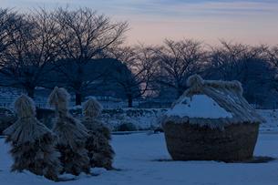 明け行く雪の見沼田んぼのフナノの写真素材 [FYI04073255]