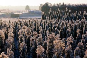 霜で覆われた植木畑に朝日さす 見沼田んぼの写真素材 [FYI04073286]