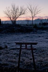 夜明けの霜の草地の小さな鳥居 見沼田んぼの写真素材 [FYI04073289]