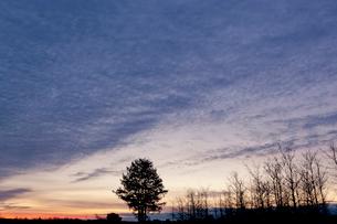 広がる雲と明け行く見沼田んぼと一本の樹の写真素材 [FYI04073312]