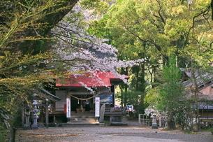 桜の紫尾神社の写真素材 [FYI04073402]