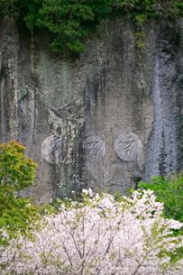 桜と磨崖仏の写真素材 [FYI04073403]