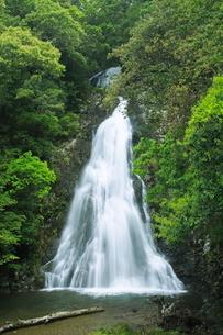 新緑の八瀬尾の滝の写真素材 [FYI04073411]