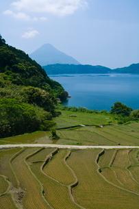 池田湖と新永吉の棚田の写真素材 [FYI04073433]