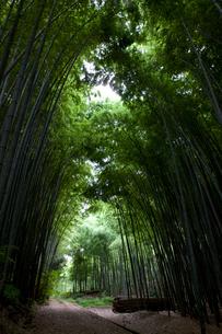 向日市の竹林の写真素材 [FYI04073566]