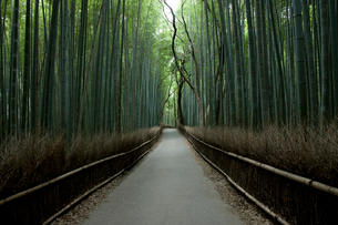 嵯峨の竹林の写真素材 [FYI04073567]