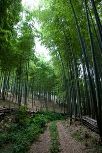 向日市の竹林の写真素材 [FYI04073568]