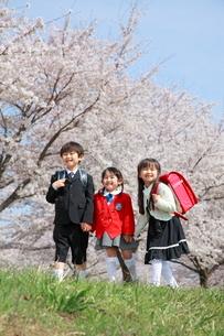 桜並木で手をつなぐ新入生たちの写真素材 [FYI04073631]